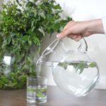 Woda. Jaką rolę odgrywa w naszym organizmie?