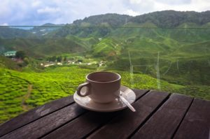 herbata_na_plantacji