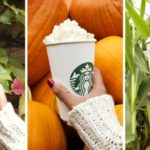 Dyniowe szaleństwo w Starbucks powraca!